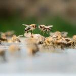 Spolek včelařů Hradčanské včely